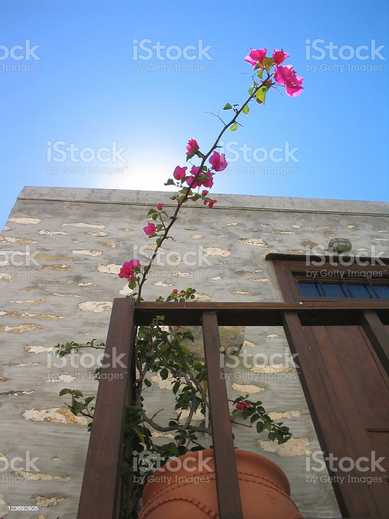 Romantic summer royalty-free stock photo