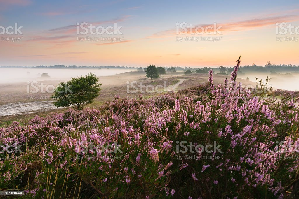 Romantic sunrise in a Dutch nature moorland stock photo