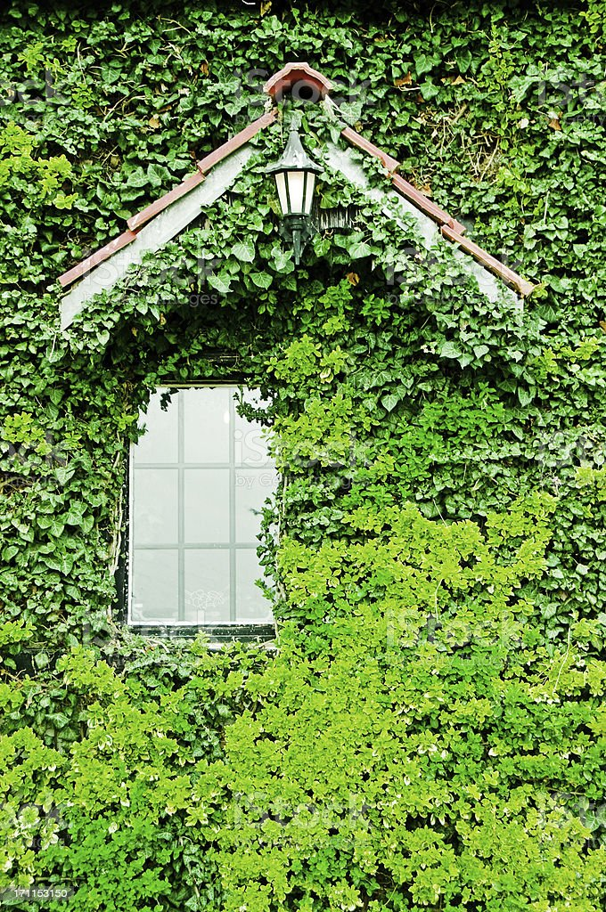 Romantic villa window completely surrounded by green ivy royalty-free stock photo
