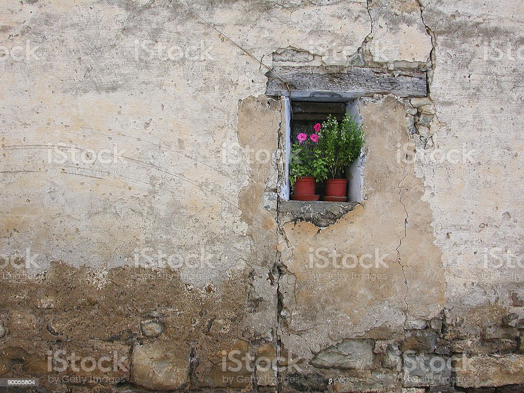 romantic wall flower royalty-free stock photo