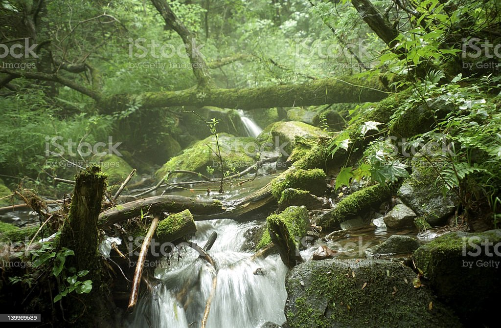 Romantic waterfall  in forest. stock photo