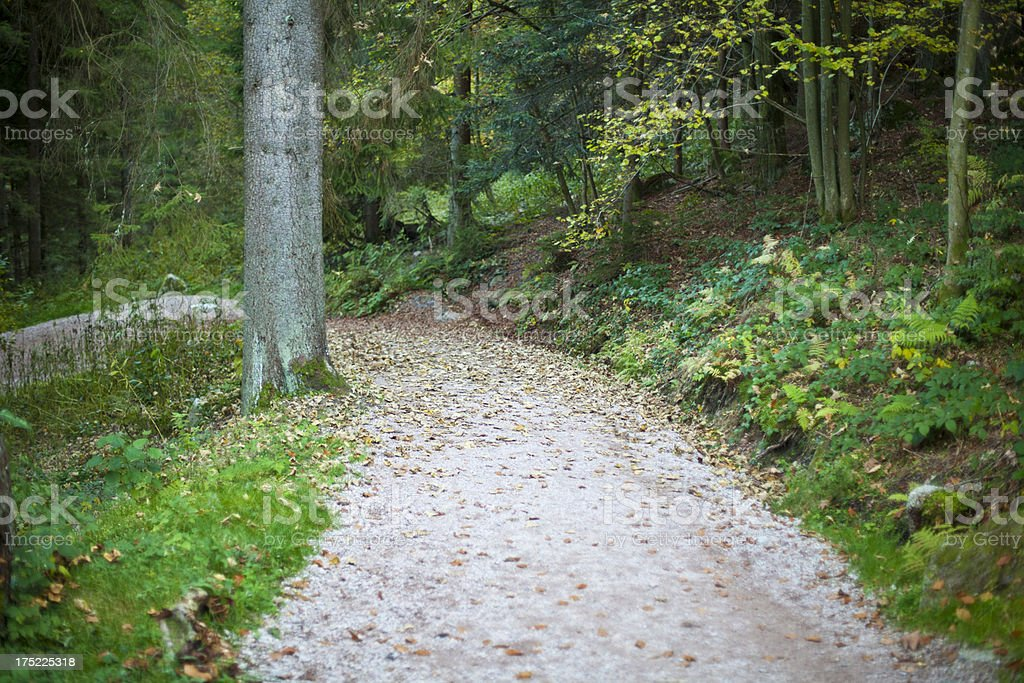 Romantic way in a forest stock photo