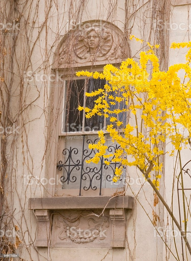 Romantic Window in Early Spring Close-up royalty-free stock photo