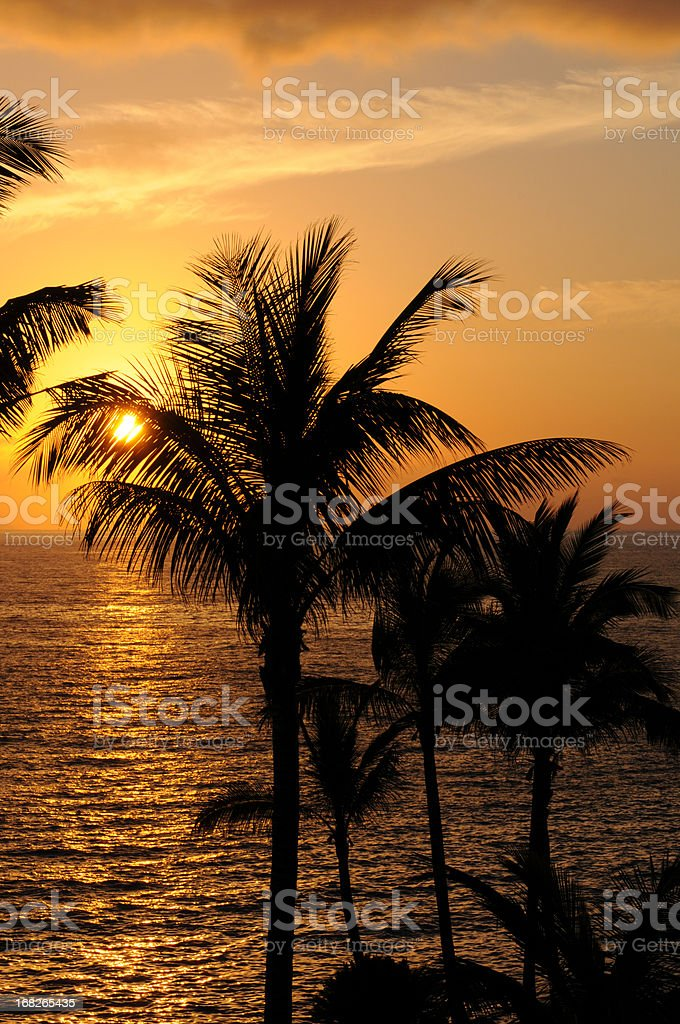 romantically sunset at atlantic coast in tenerife with palm tree stock photo
