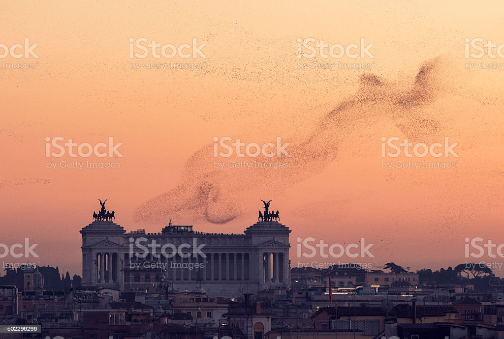 Rome skyline with Vittorio Emanuele Monument and flocks of starlings...