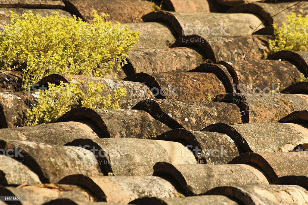 Roof made of tiles with little plants growing royalty-free stock photo
