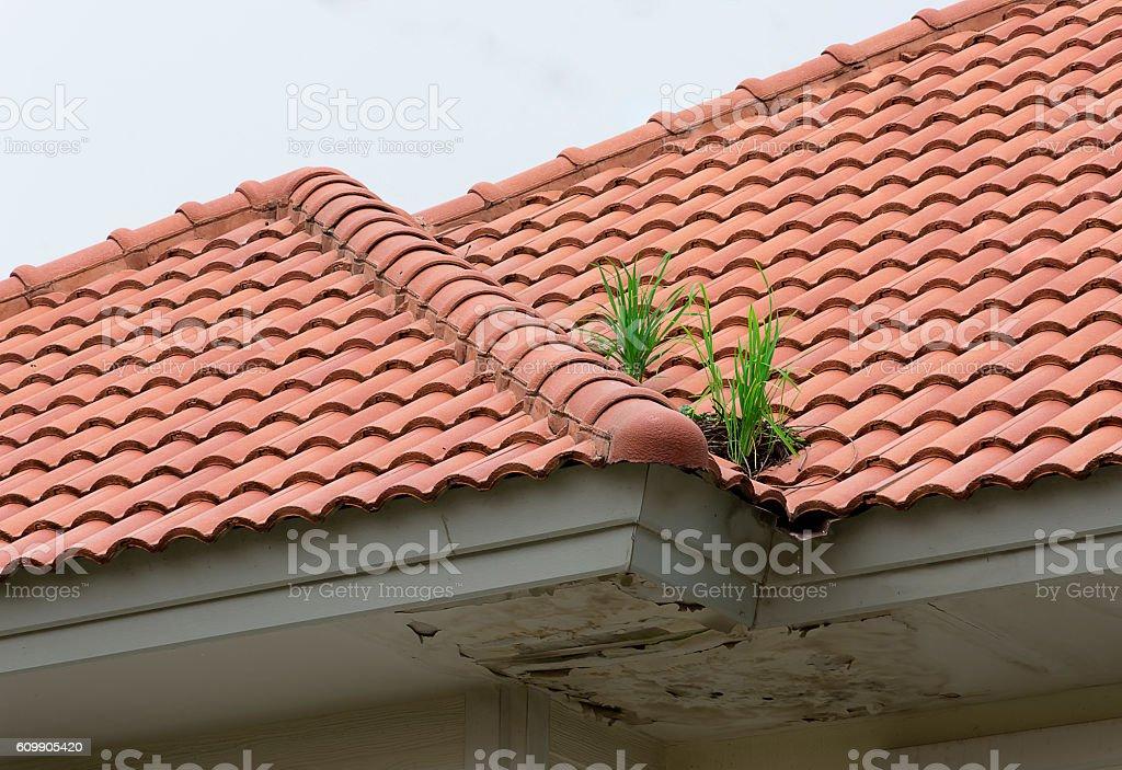 Roof problem. stock photo