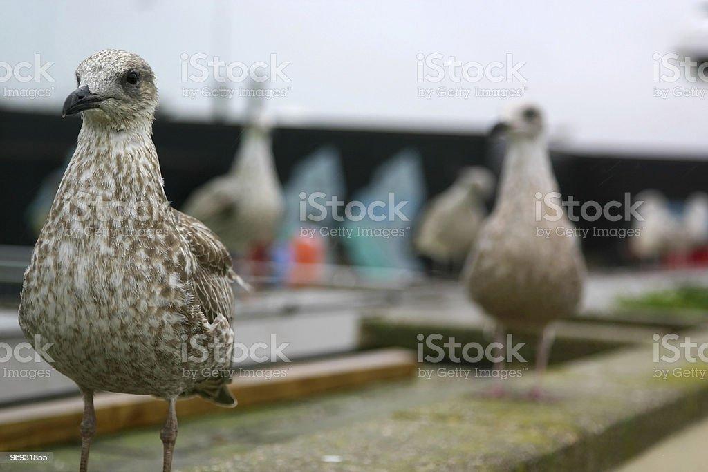 Rooftop bird stock photo