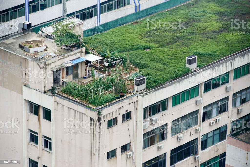 Rooftop Vegetable Garden royalty-free stock photo
