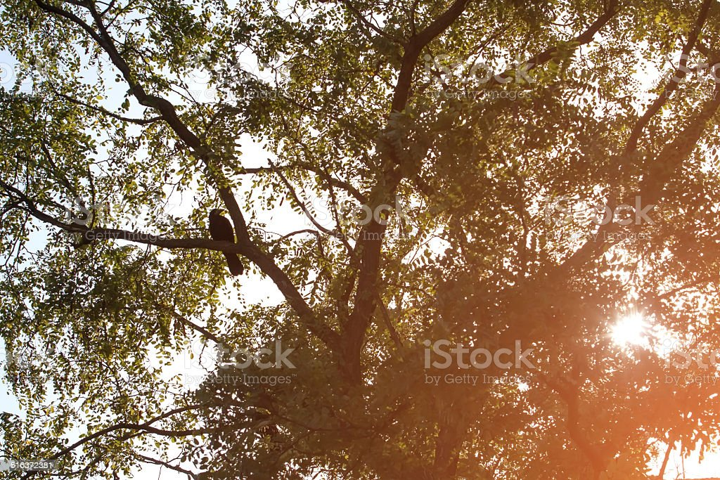 Rook sitting on a tree royalty-free stock photo