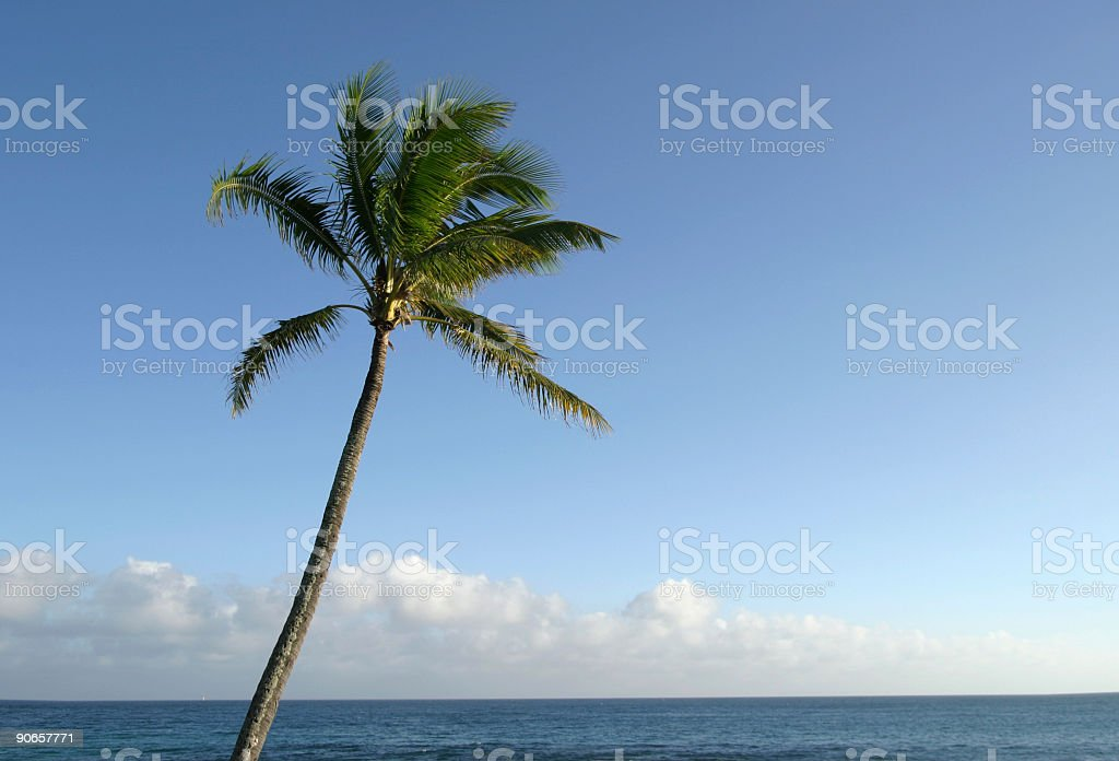 Room For Copy Palm Tree royalty-free stock photo