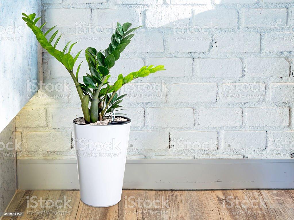 Room interior with plant pot decoration near white brick wall stock photo