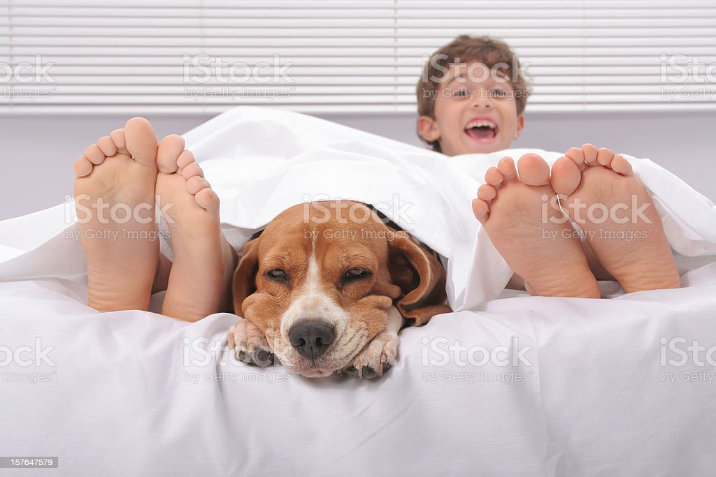 Roomies royalty-free stock photo