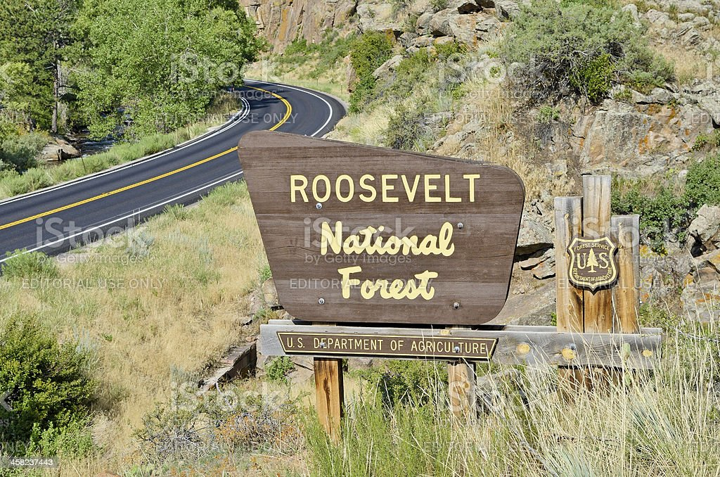 Roosevelt National Forest stock photo