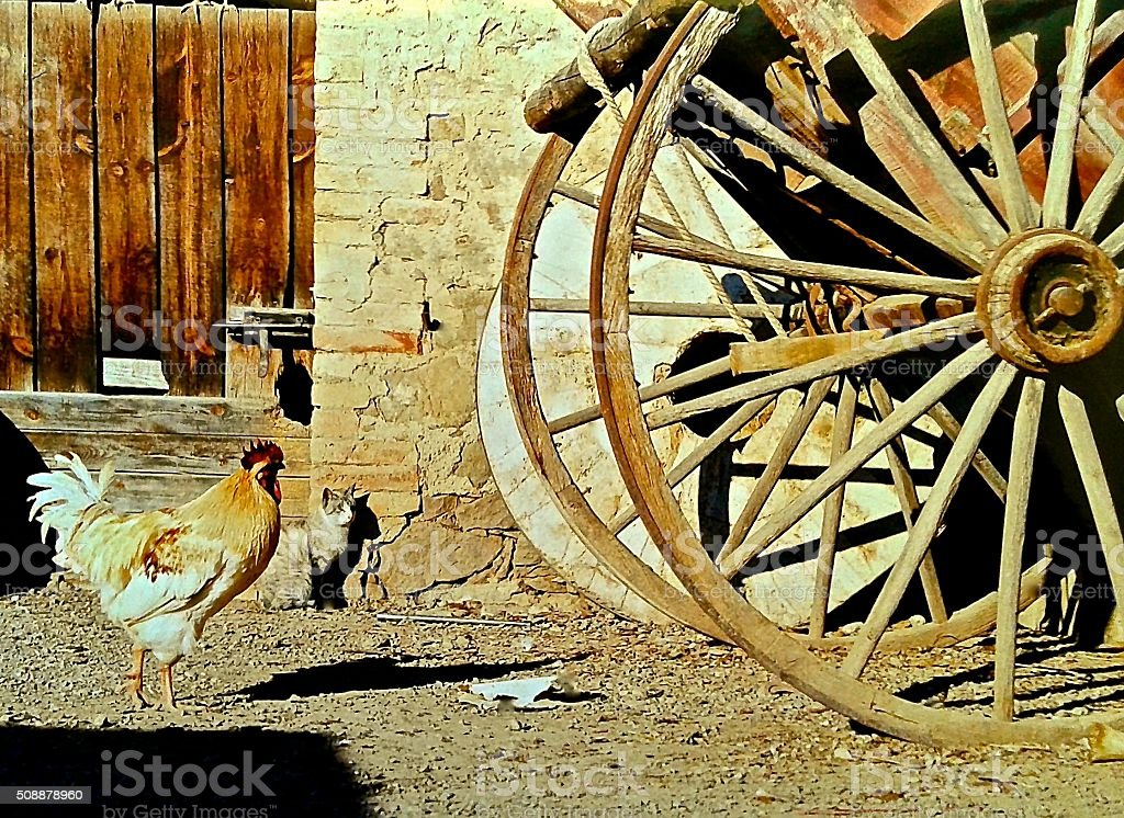 Rooster, cat and wooden cart on a farm. stock photo