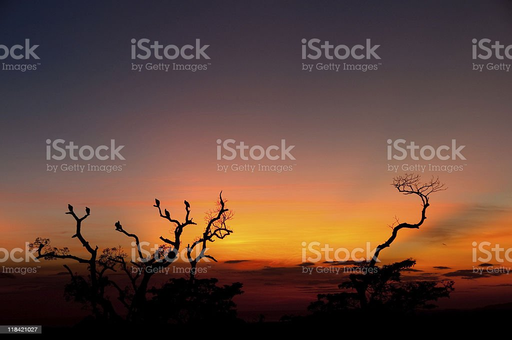 Roosting tree at sunset royalty-free stock photo