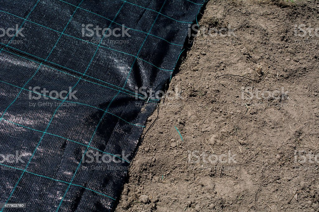 Root cloth covered ground stock photo