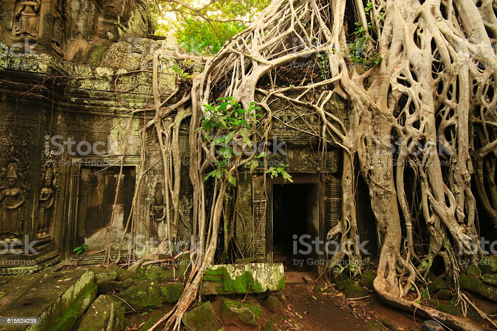 Root Covered Temple stock photo