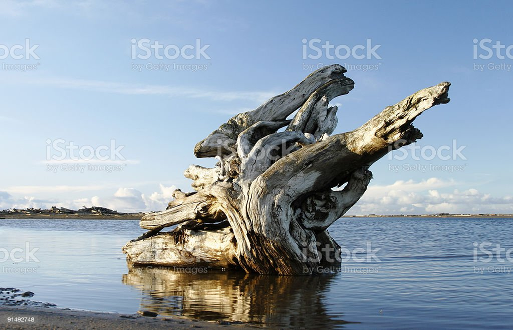 Root in the water. royalty-free stock photo