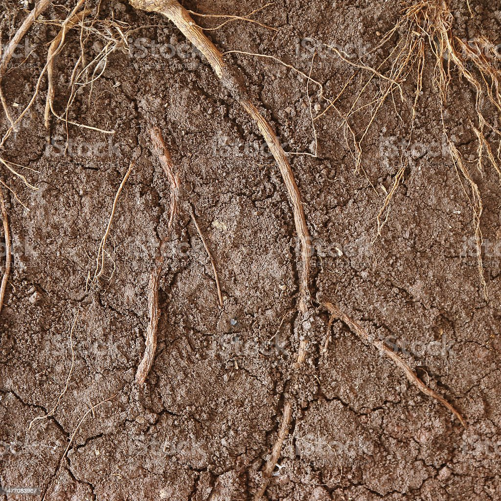 root of  tree in the ground stock photo