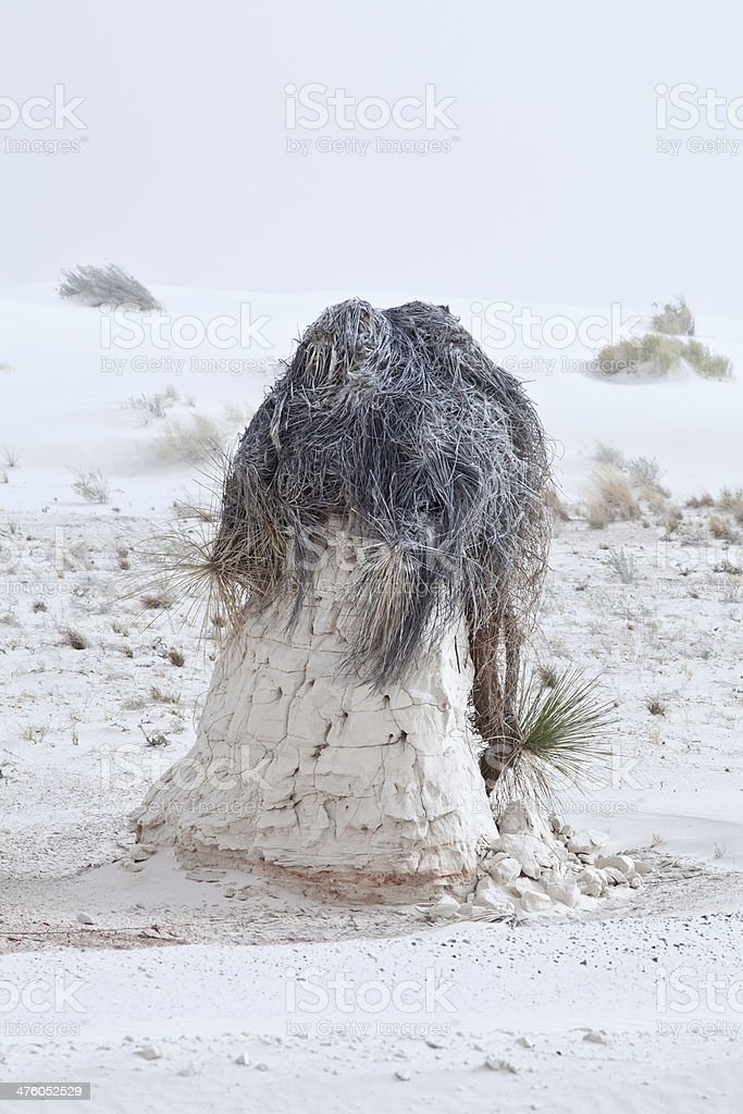 Root pedestal at White Sands stock photo