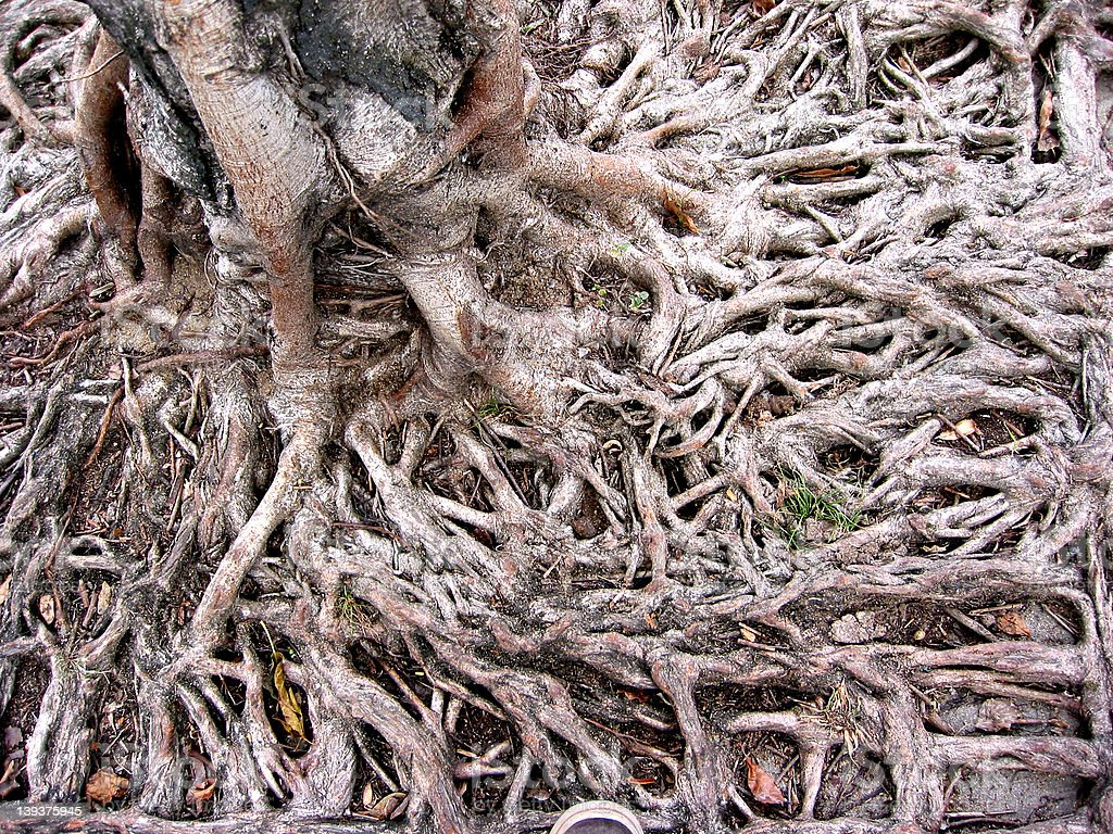 Root01 royalty-free stock photo