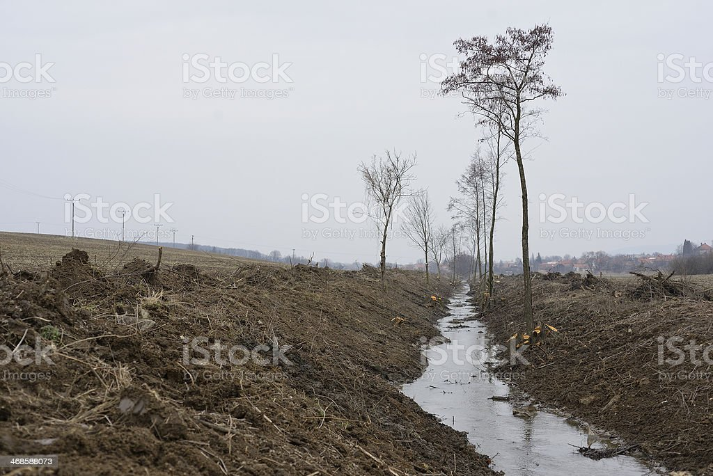 Rooted out royalty-free stock photo