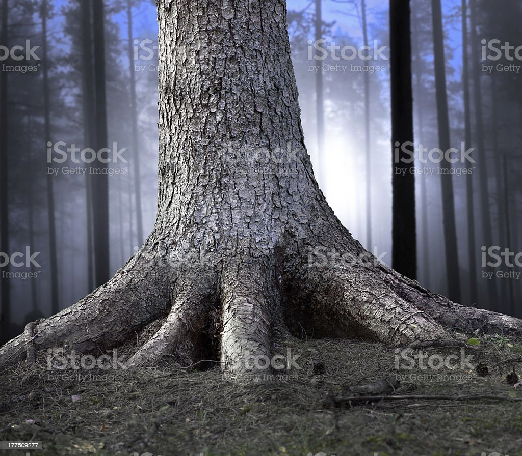 Rooted tree royalty-free stock photo