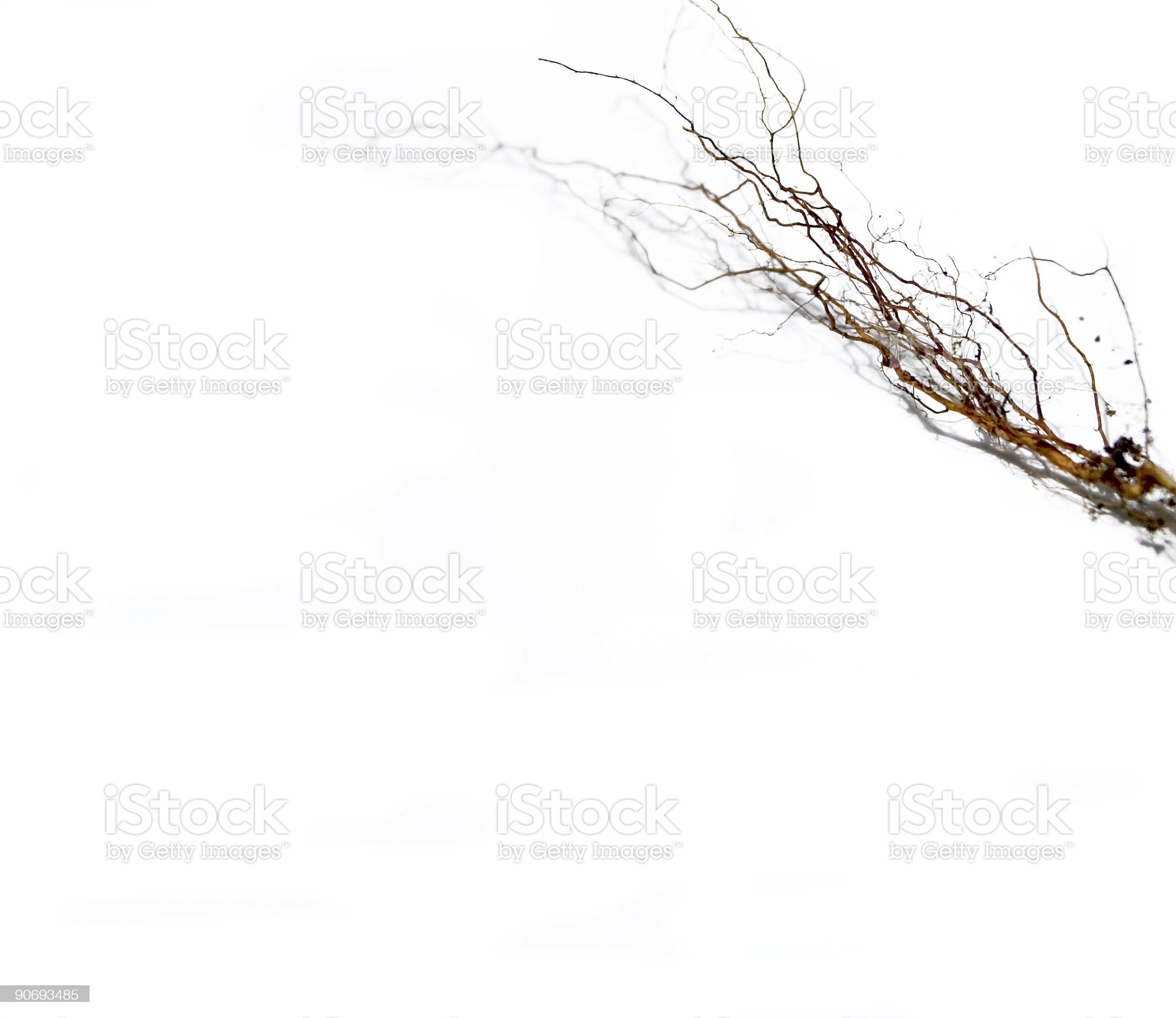 roots: 4 royalty-free stock photo