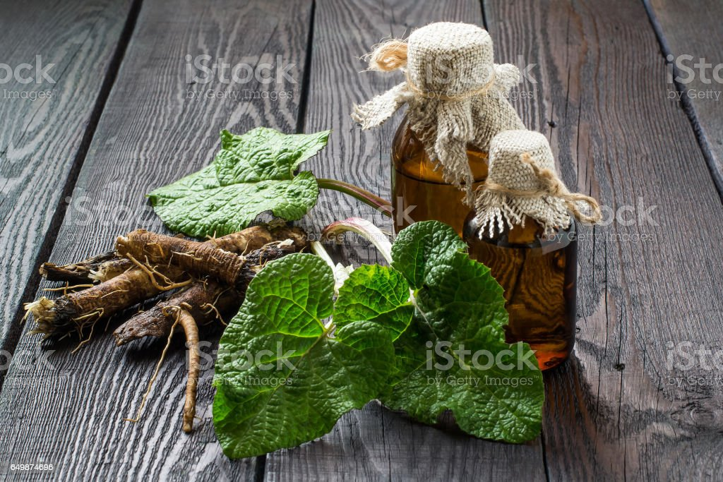 Roots and leaves of burdock (Arctium lappa), burdock oil in bottles stock photo