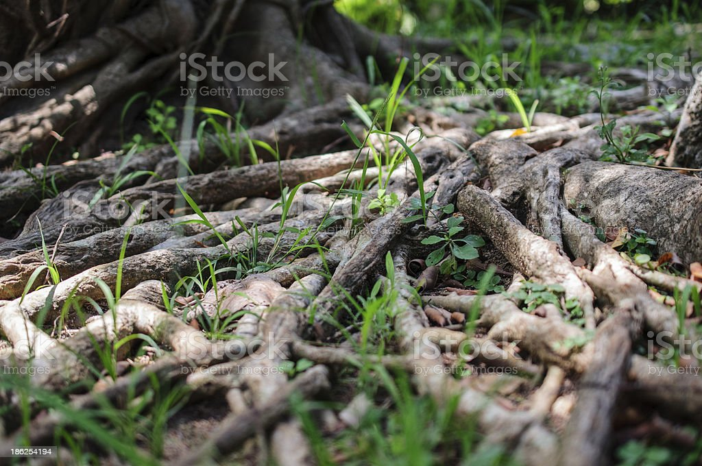 roots and tree stock photo