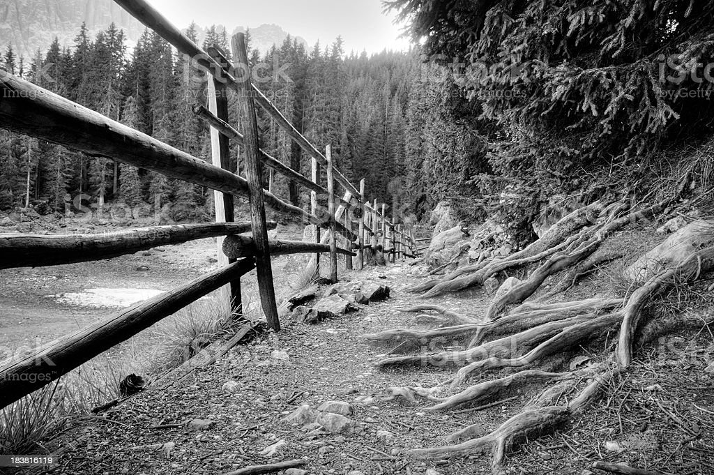 Roots and wooden fence along a path royalty-free stock photo
