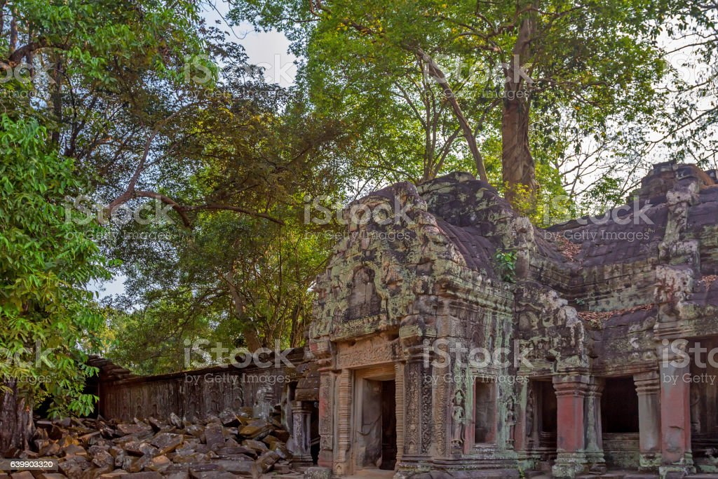 Roots cover the ruins of Ta Prohm Temple, Angkor stock photo