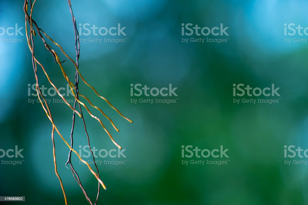Roots Dancing in Wind stock photo