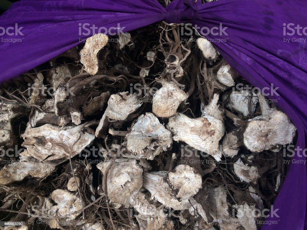 Roots of pepper plant used to produce Kava drink in Fiji stock photo