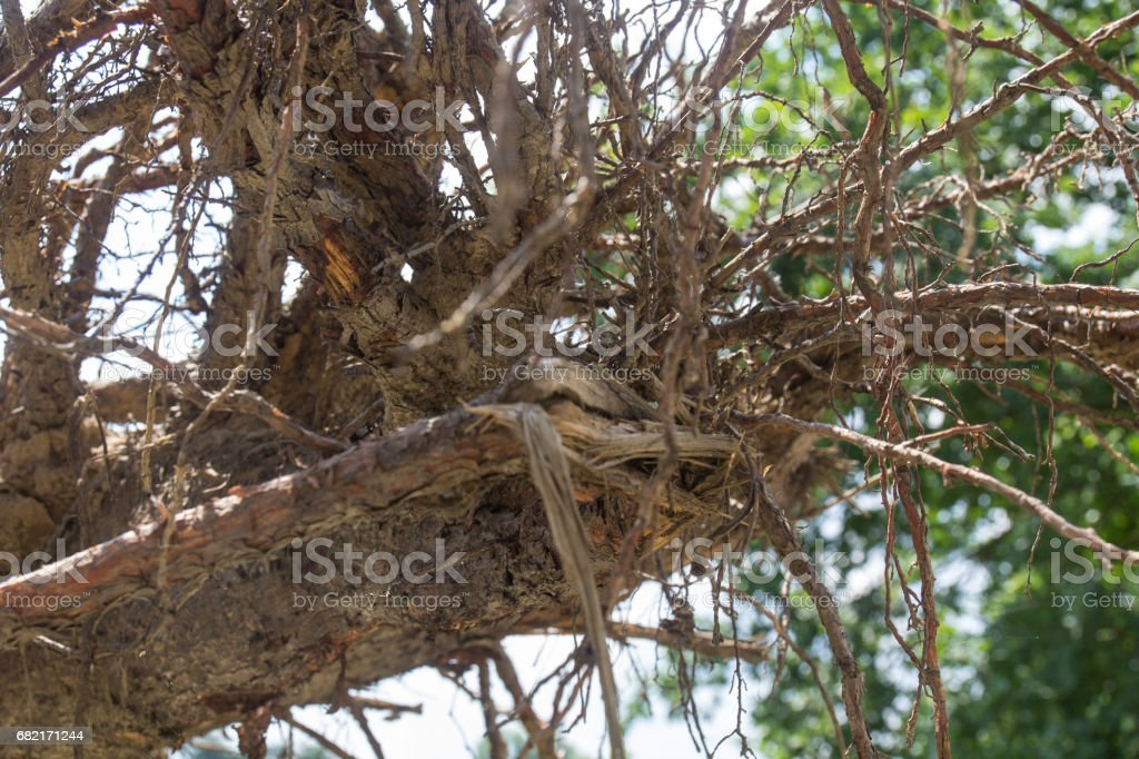 roots of plants stock photo