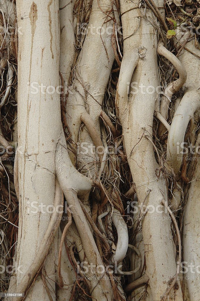 Roots stock photo
