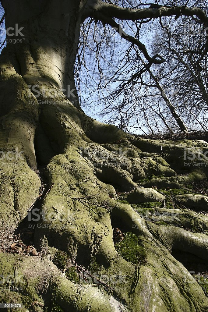 roots royalty-free stock photo