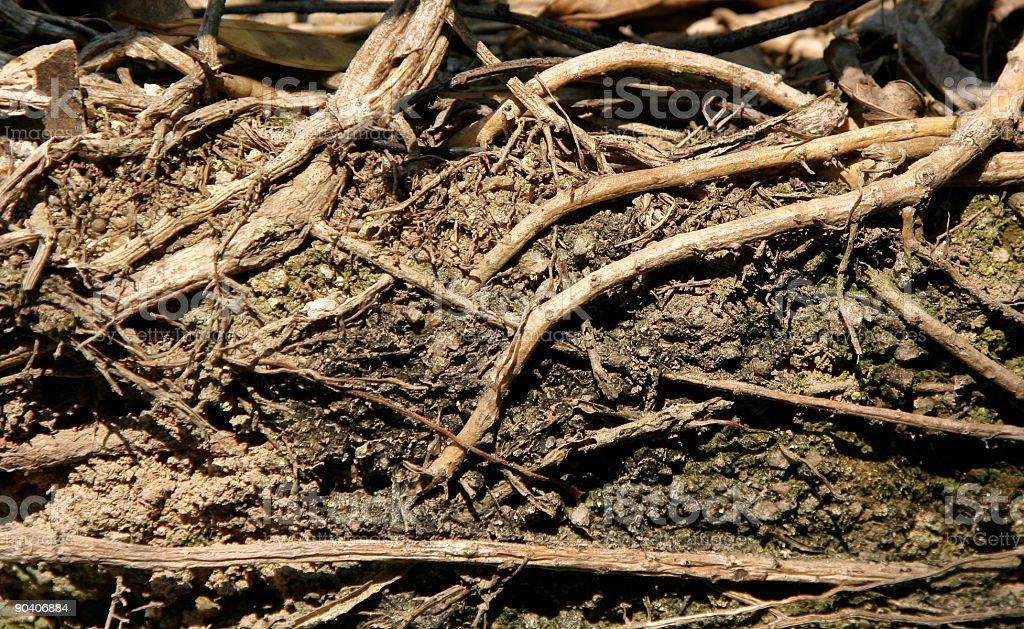 roots foto de stock libre de derechos