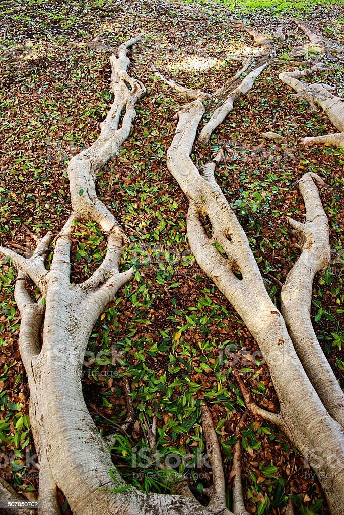 Roots Spreading Away stock photo
