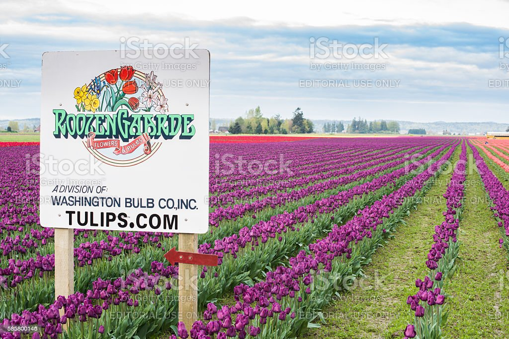 Roozengarde sign at the Skagit Tulip Festival stock photo