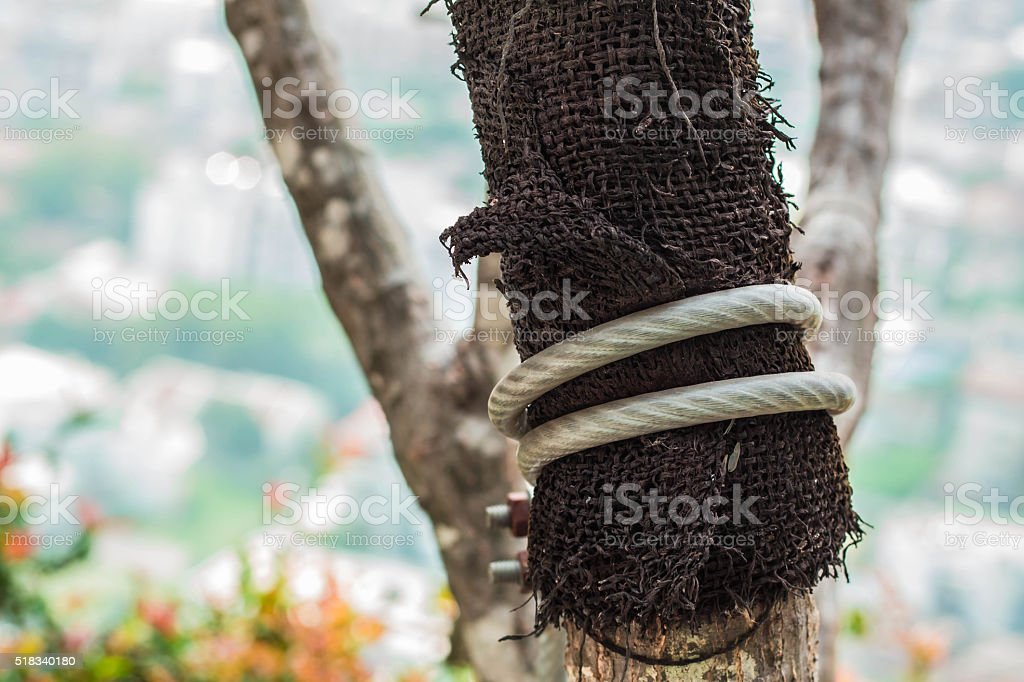 Rope attached to a tree stock photo