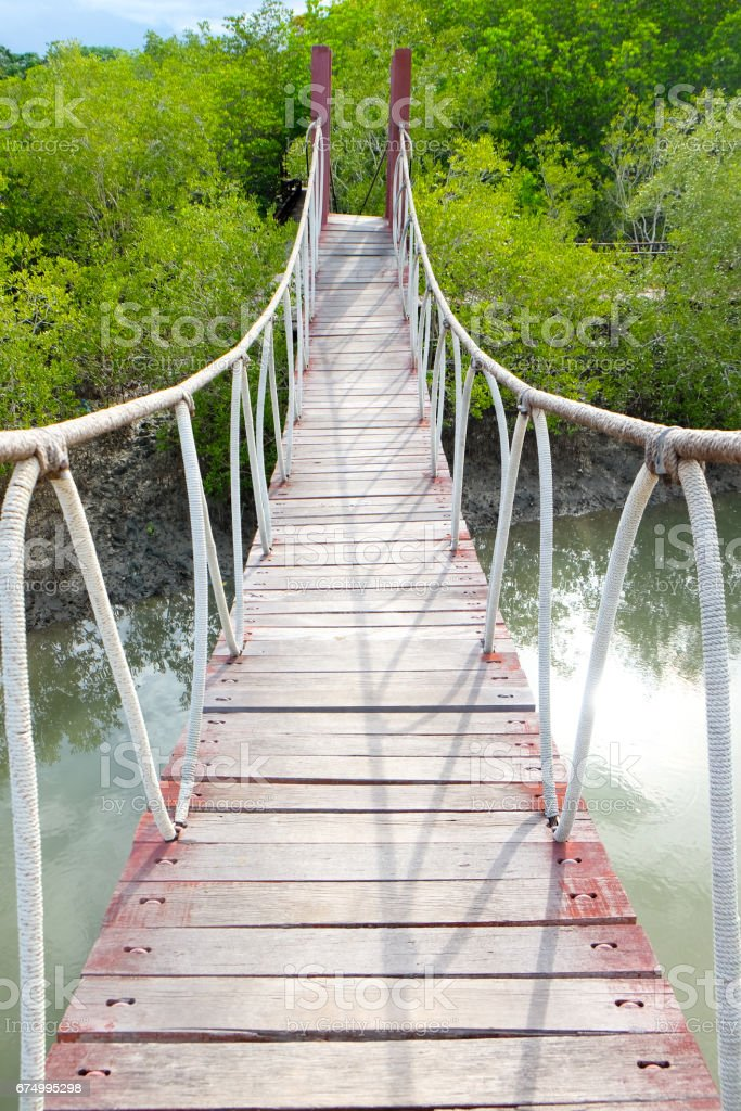 Rope bridge in mangrove forest, in National Park Thailand stock photo