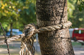 Rope Secure Tied Around Tree Trunk Strength Outdoors Morning
