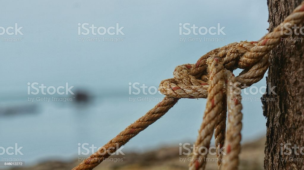 Rope tied up with a knot on a tree stock photo