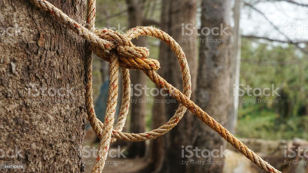 Rope with knot around brown tree trunk stock photo
