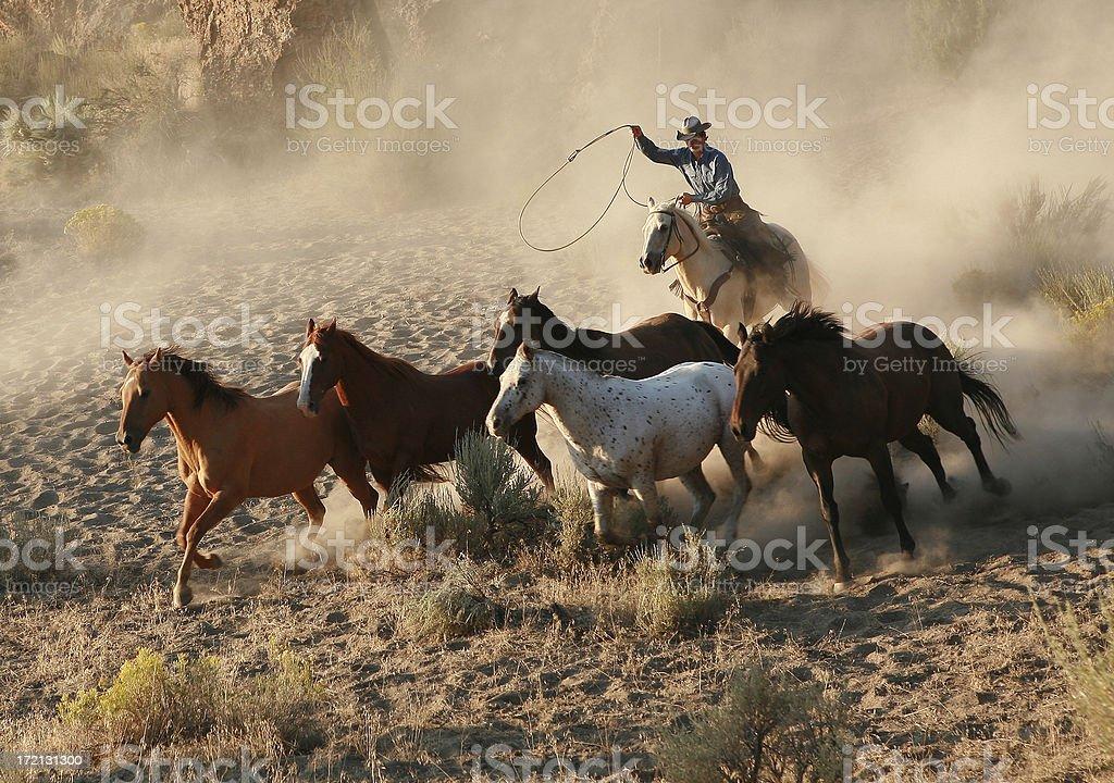 Roping wild mustang at dawn stock photo