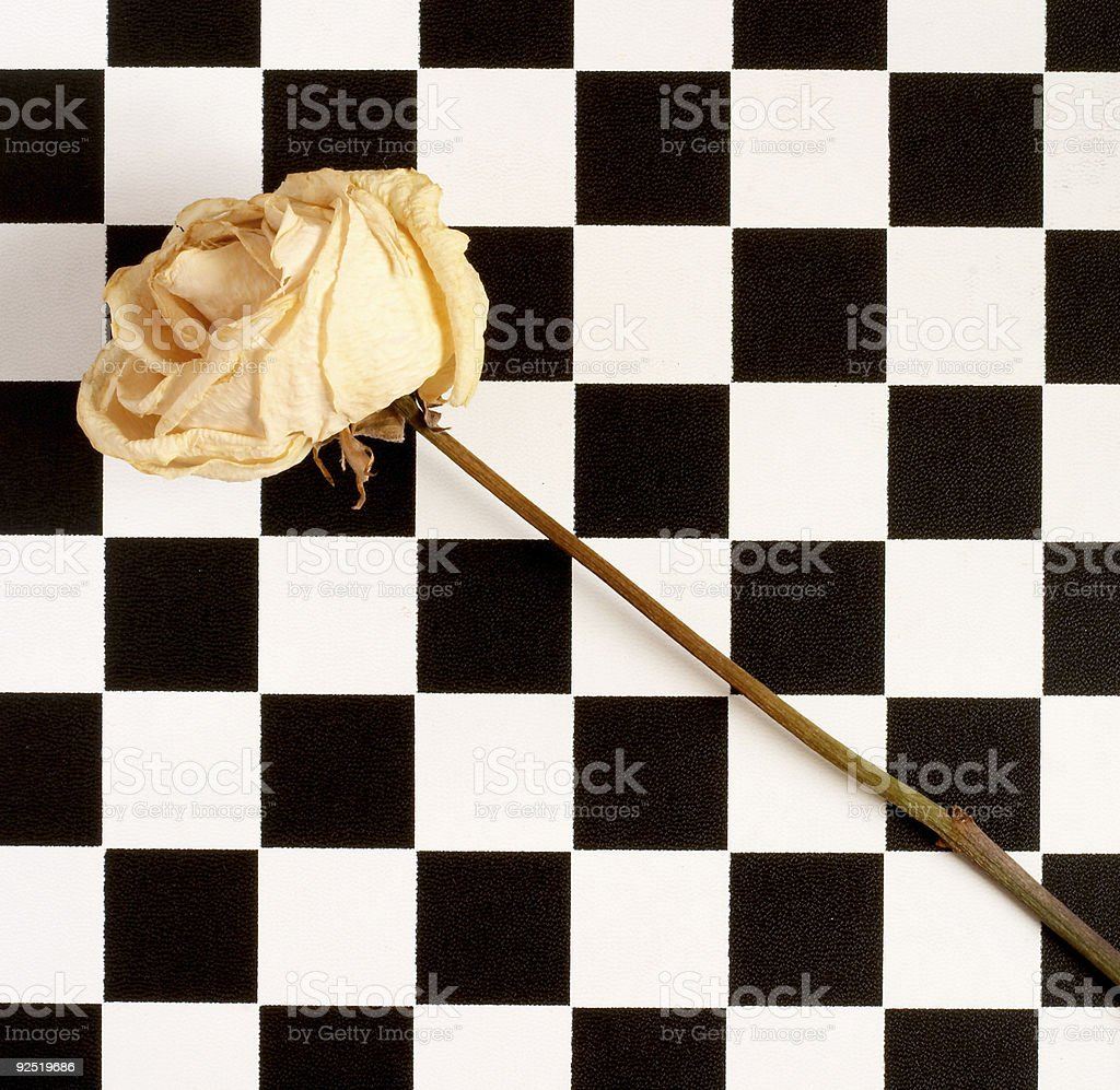 Rose and chessboard 1 stock photo