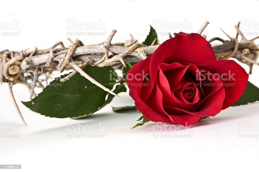 Rose and Crown royalty-free stock photo