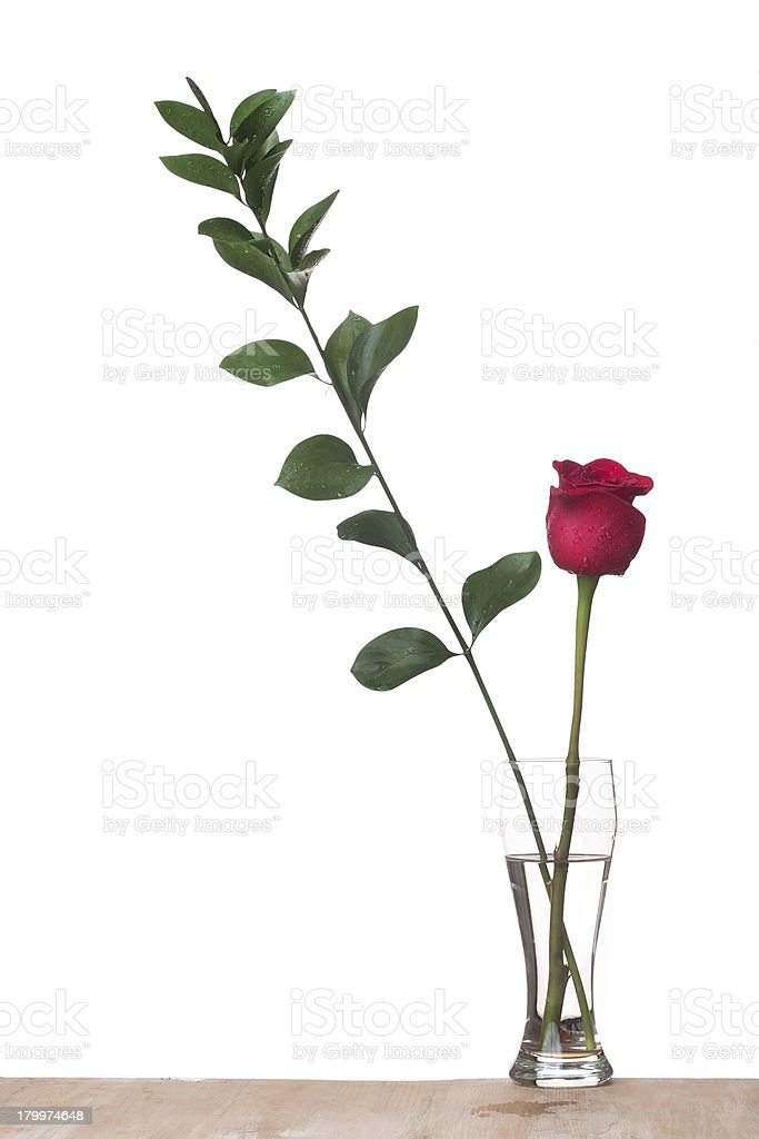 Rose and  decorative green branch royalty-free stock photo